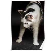New Yoga Pose: Downward Cat! Poster