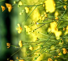 Buttercup iPhone and iPod Case by enlightenedscrp