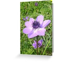 One Delicate Pale Lilac Anemone Coronaria Wild Flower Greeting Card