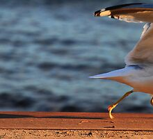 Gull be Gone by Nazareth