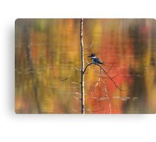 Painted Kingfisher Canvas Print
