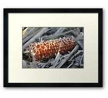 Field's First Frost Framed Print