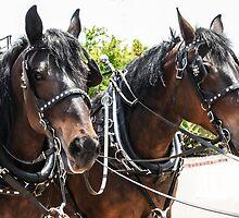 Wells Fargo Horses by heatherfriedman