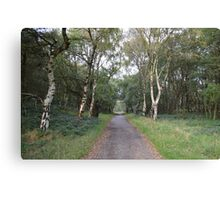 Autumn Path Lined With Silver Birches Canvas Print