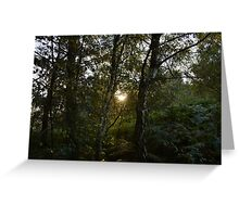 Sun Through Trees on Cannock Chase Greeting Card