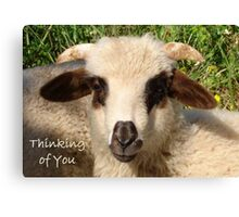 Ewe Portrait With Thinking of You Greeting Canvas Print
