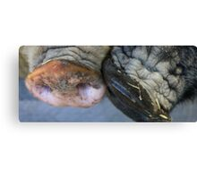 Two Pigs in a Pod Canvas Print