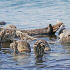 Seal Pod at Katmai by Graeme  Hyde