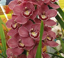 Gorgeous Orchids by helenclare