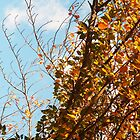 Autumn Treetops by Grace314