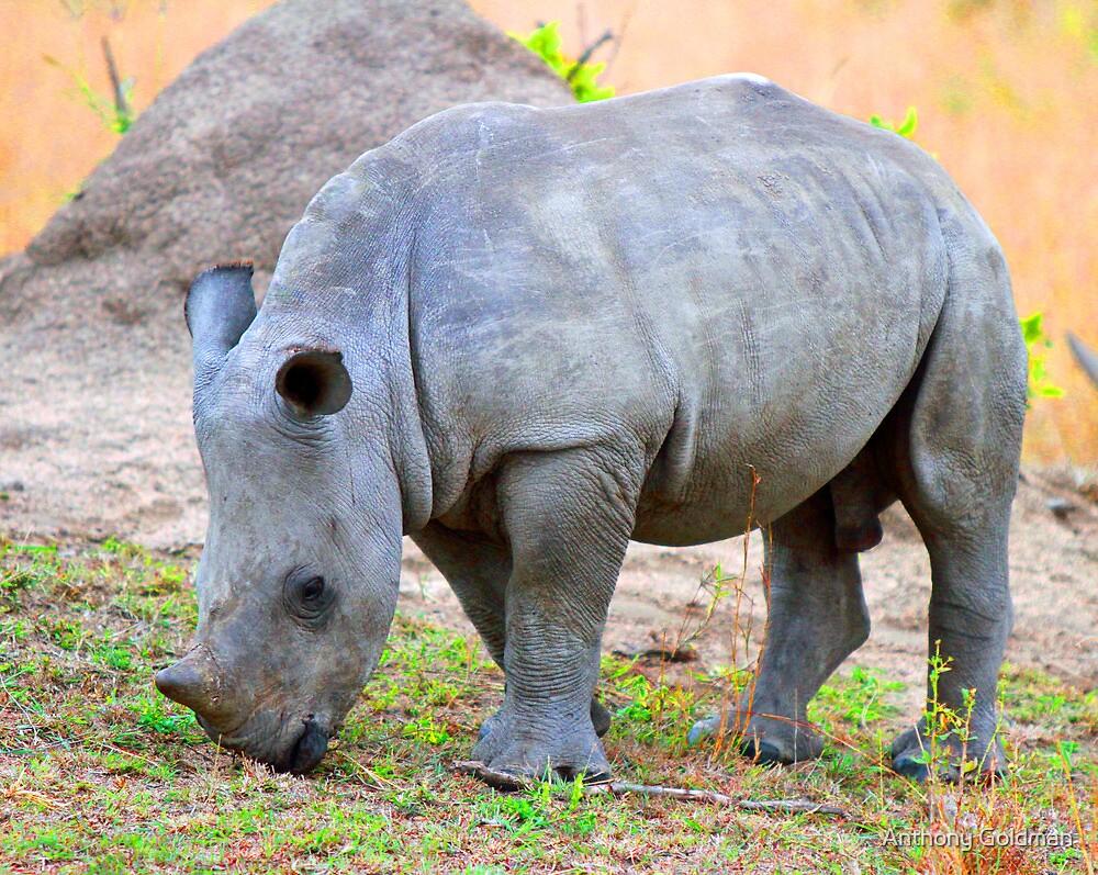 A Baby White Rhino by jozi1