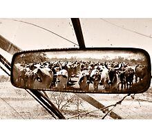 Homeward Bound Photographic Print