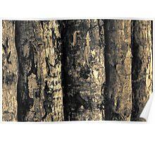 Plantation Logs - 2 (duotone) Poster