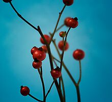 Red berries by Andreas  Berheide