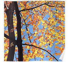Sunlit Beeches in Autumn Poster