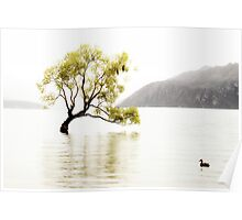The Wanaka Tree in the Lake Poster