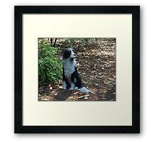 Wire Dog Framed Print