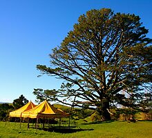 Party tree at Hobbiton - New Zealand by Nicola Barnard