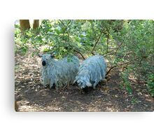 Wire Sheep Canvas Print