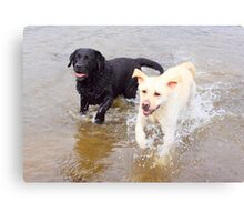Golden and Black labs Canvas Print