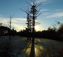 Backlit Cypress by WildestArt