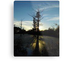 Backlit Cypress Metal Print