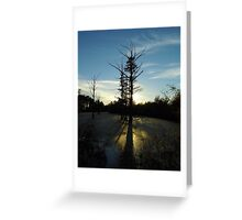 Backlit Cypress Greeting Card