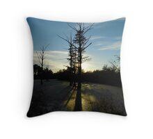 Backlit Cypress Throw Pillow