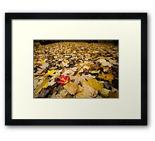 Forest Floor Autumn Framed Print