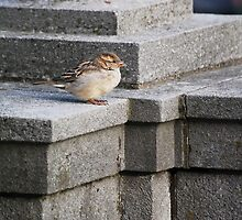 Architectural Perch by Laurie Minor