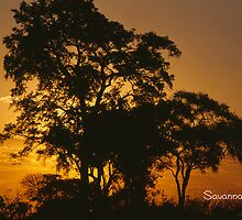 Savannah Sunset by KurtKeller