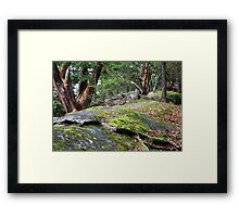 Arbutus Trees on the Rocks Framed Print