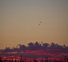 Call of the Loon - Saskatchewan by RobertCharles