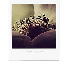 PANTONE  #125 Photographic Print
