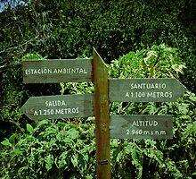 Different paths, but one sure. by ALEJANDRA TRIANA MUÑOZ