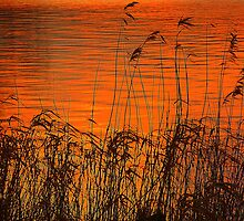 Sunset On The Lough Cowey Reed Beds by Fara