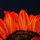 Flaming Sunflower by Dennis Reagan
