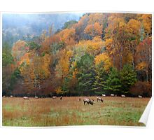 autumn in the valley of the elk Poster