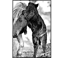Shetland Mare and Foal in Black and White Photographic Print