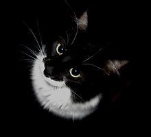Tux Kitty by RazanAlt