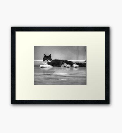 Contemplative Tux Framed Print