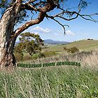Greetings from Australia, Yarra Valley by Pauline Tims