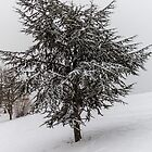 Fir Tree in winter by Mathieu Longvert