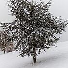 Fir Tree in winter by Mathieu Longvert