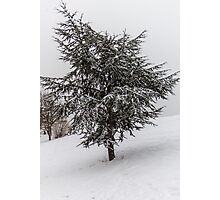 Fir Tree in winter Photographic Print