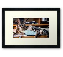 Lazin' on the Desktop Framed Print