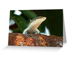 Lizard - Zambia Greeting Card
