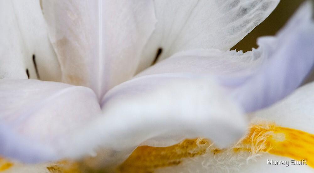 White shrimp plant by Murray Swift