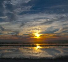 Levee Sunset by Barbara  Brown