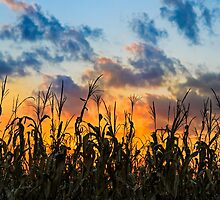 Sundown Cornfield by Kenneth Keifer